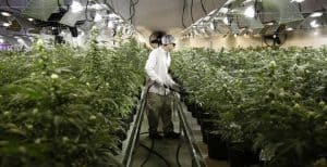 Read more about the article Cannabis Jobs: All You Need To Know About Jobs In The Marijuana Industry