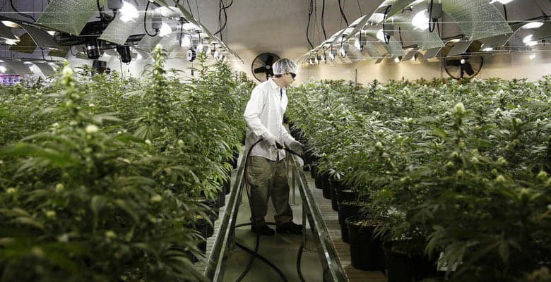 Cannabis Jobs 🔥 2018 Top 11 Best Weed Jobs Hail Mary Jane