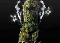 Marijuana-Music1