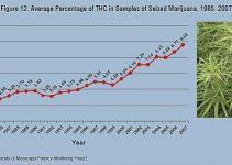 Thc percentage chart