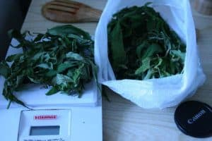 Read more about the article How to Make CannaMilk [W/ Pics]