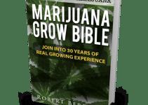 marijuana bible