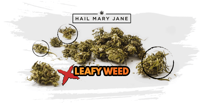 leafy weed