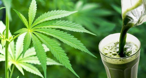 make fresh cannabis juice whats is cannbis