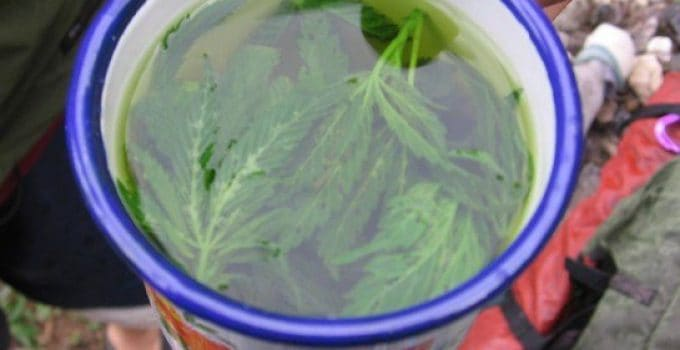 Brew marijuana Tea