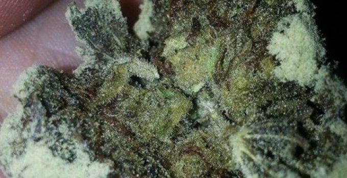 caviar marijuana