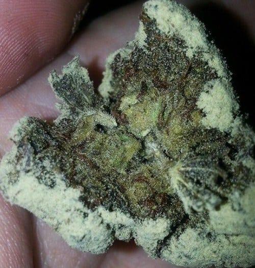 The 1 400 Ounce Known As Caviar Marijuana Hail Mary