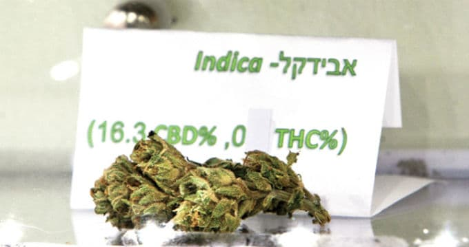 what is cannabis indica strains