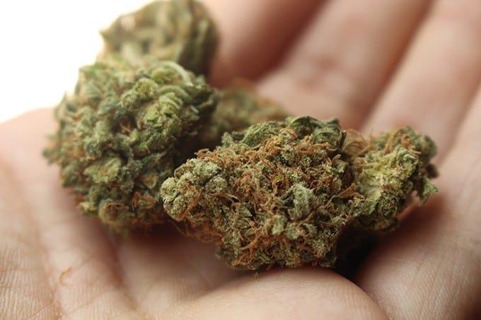 Cannabis Stress