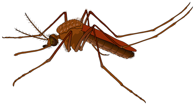 Cannabis for insect bites