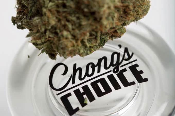 chongs choice review