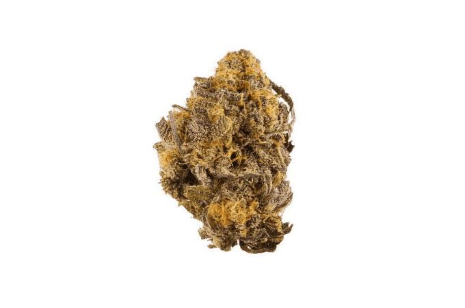 purple kush exotic strain