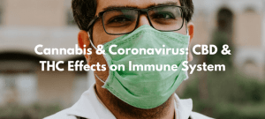 Cannabis & Coronavirus: CBD & THC Effects on Immune System