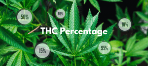 THC Percentage in Cannabis: How Much Is Too Much