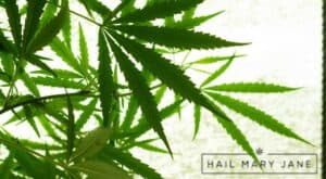Read more about the article Cannabis Sativa: Does Sativa Make You Sleepy or Hyper