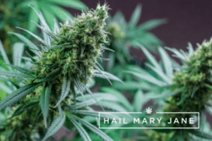 Read more about the article Fuelato Strain – All You Need To Know