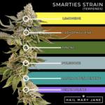 Smarties Strain